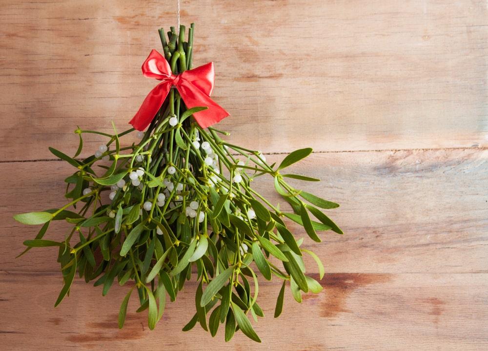 El origen del muérdago navideño - Floristería Nerine
